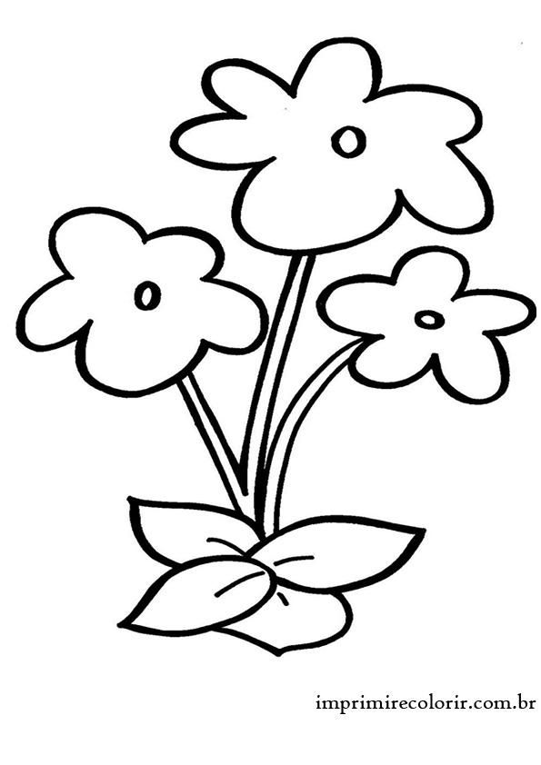 lindasflores