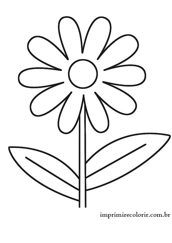 Margarida Flor Desenho Para Colorir